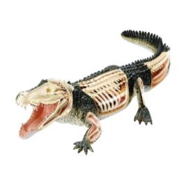 4D Master Крокодил (2)
