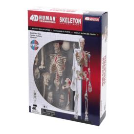 4D Master Скелет человека (1)