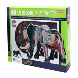 анатомическая модель 4D Master Слон (1)