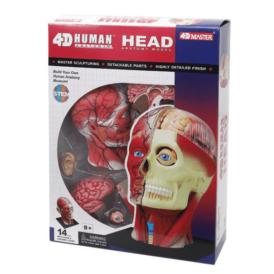 Об'ємна анатомічна модель 4D Master Голова людини (1)