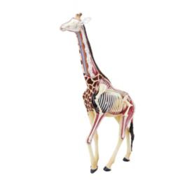 Об'ємна анатомічна модель 4D Master Жираф (2)
